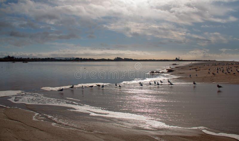 Gaviotas y seafoam del desbordamiento de levantamiento de la marea de la onda en el río Santa Clara en la playa de la loma de las foto de archivo