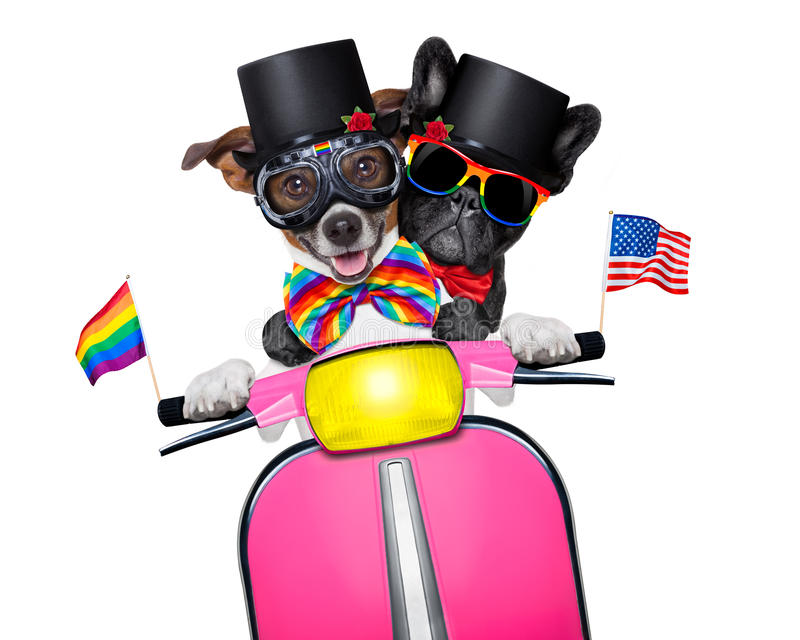 Gay marriage dogs stock photo