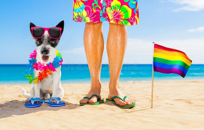 Gay pride dog and owner on   summer holidays stock photography