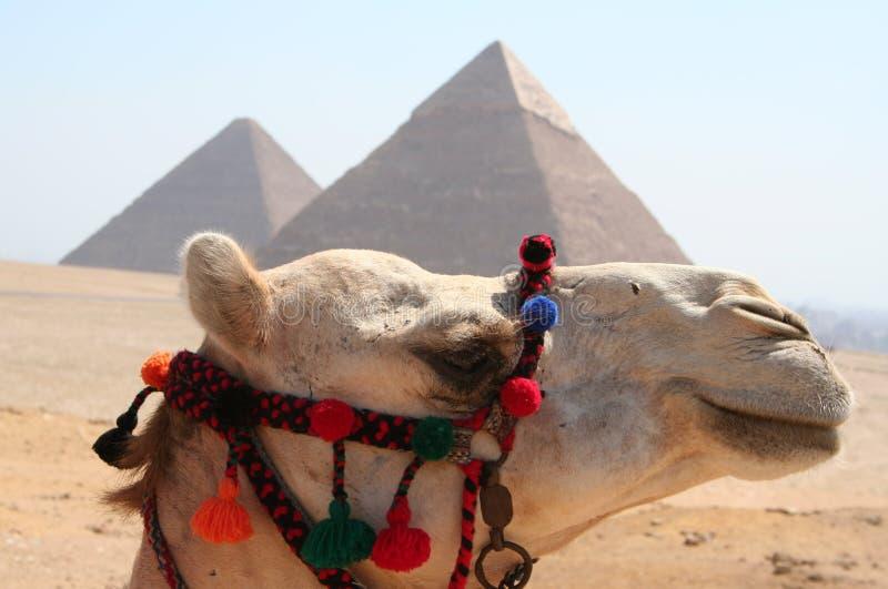 gaza pyramider royaltyfri foto