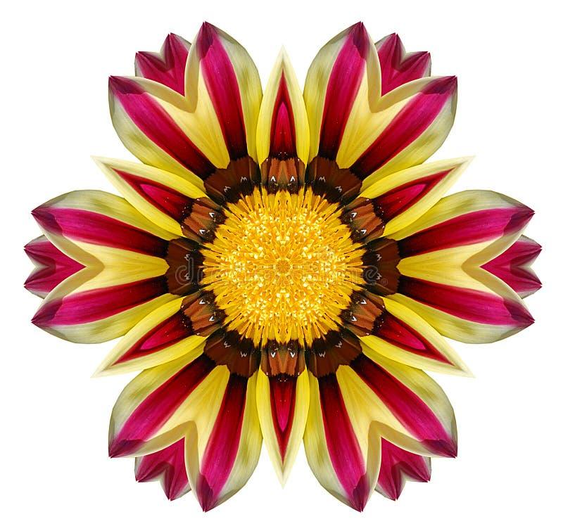 Gazania flower mandala. Isolated on white background royalty free stock photo