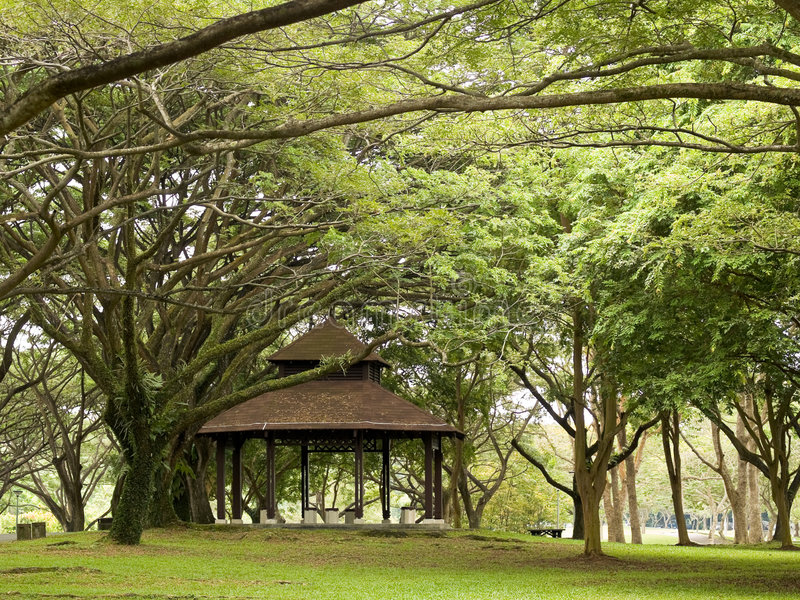 Download Gazebo stock photo. Image of branching, park, structure - 3114072