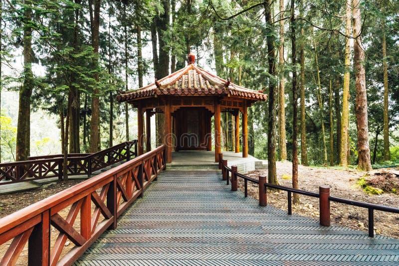 Gazebo cinese con gli alberi di cedro giapponese nella foresta in Alishan Forest Recreation Area nazionale nella contea di Chiayi immagine stock libera da diritti