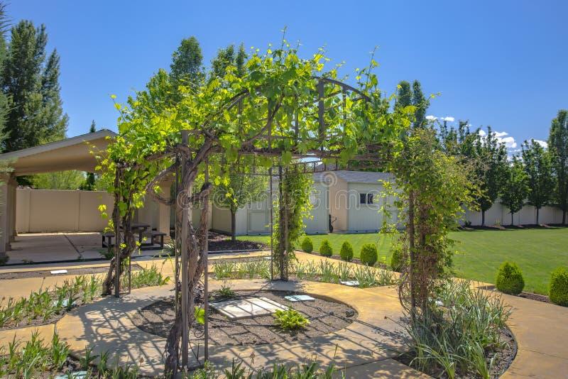 Gazebo del cortile con crescere delle viti fotografia stock