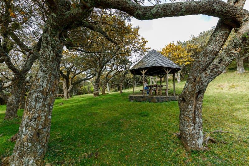 Gazebo en DES Cafres, Reunion Island de Plaine del La foto de archivo