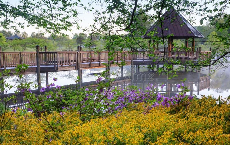 Gazebo en el lago de niebla rodeado por las flores de la primavera imagenes de archivo