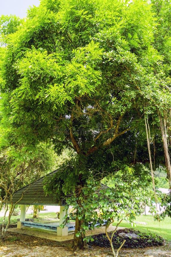 Gazebo fra gli alberi verdi fotografia stock