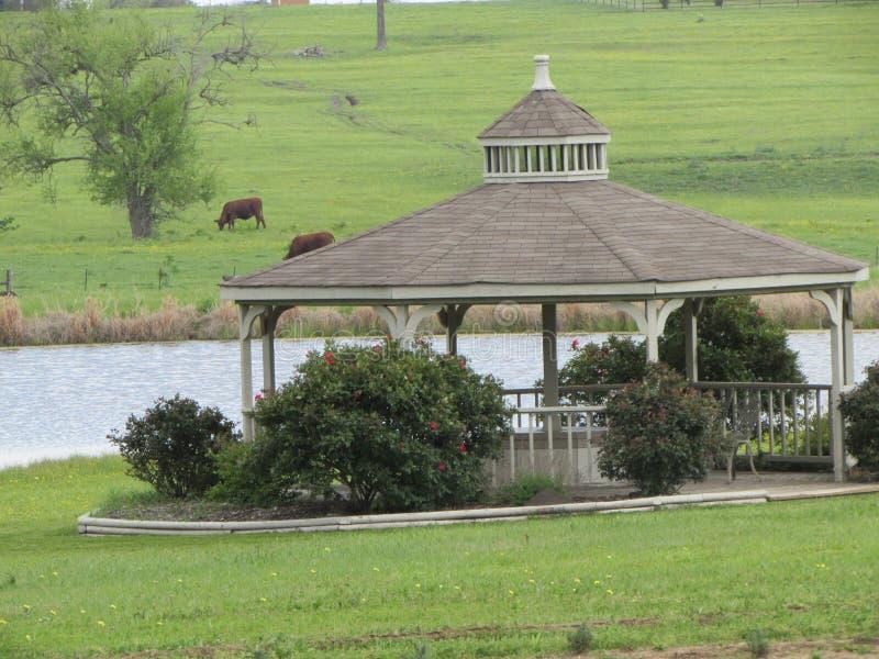 Gazebo grande de Tejas cerca de la corriente y del ganado foto de archivo libre de regalías