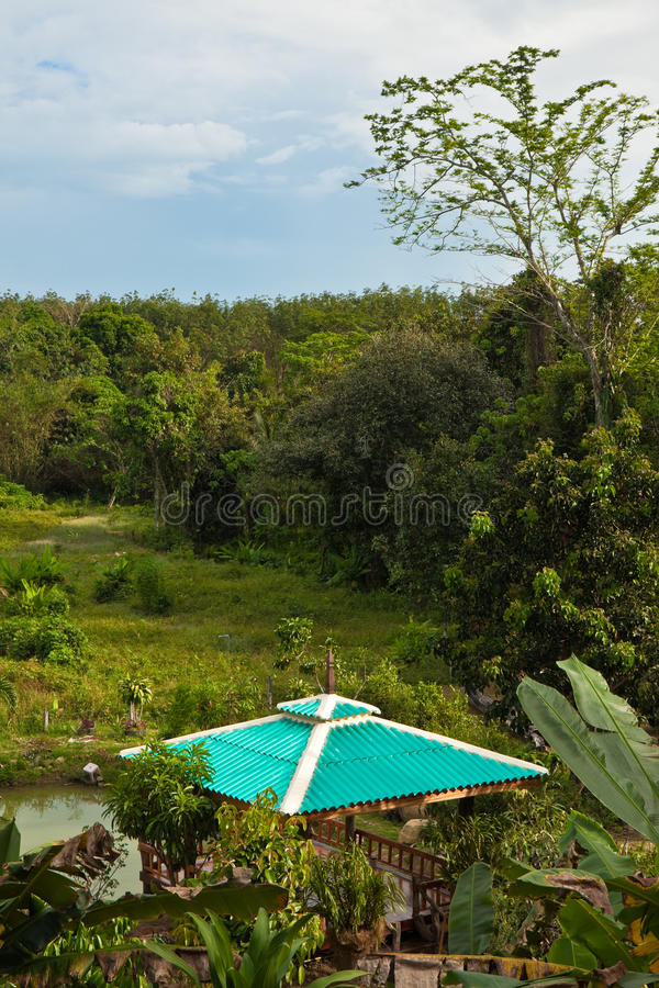 Gazebo in the Jungle royalty free stock images