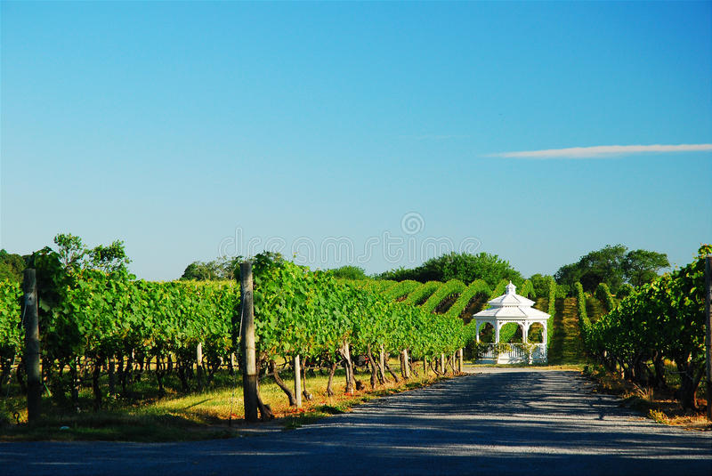 Gazebo in the Vineyard. A gazebo is placed firmly in a lush vineyard stock images