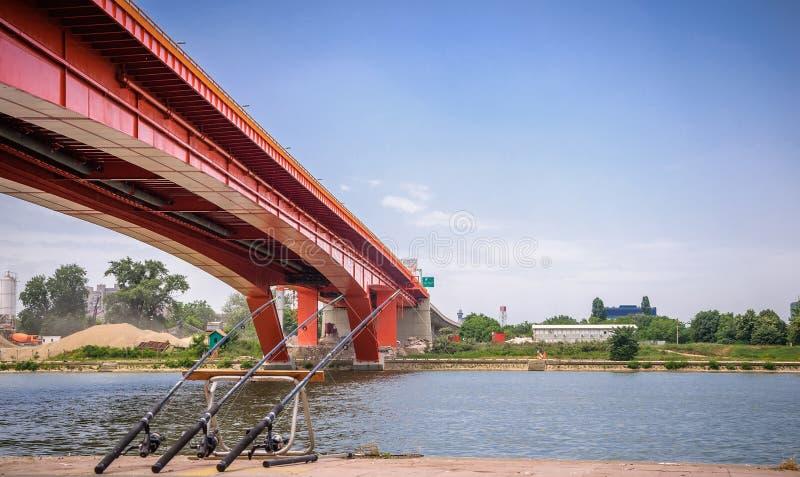 Gazela bro arkivfoto