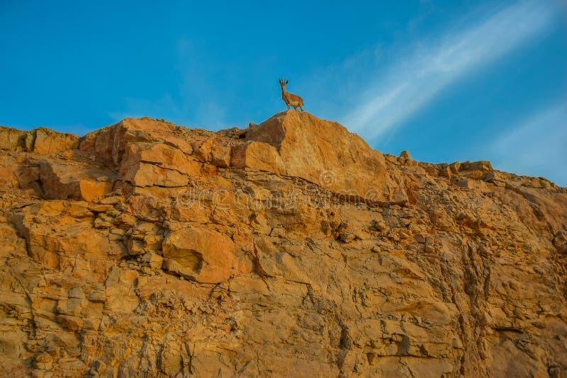 gazelle stockbild