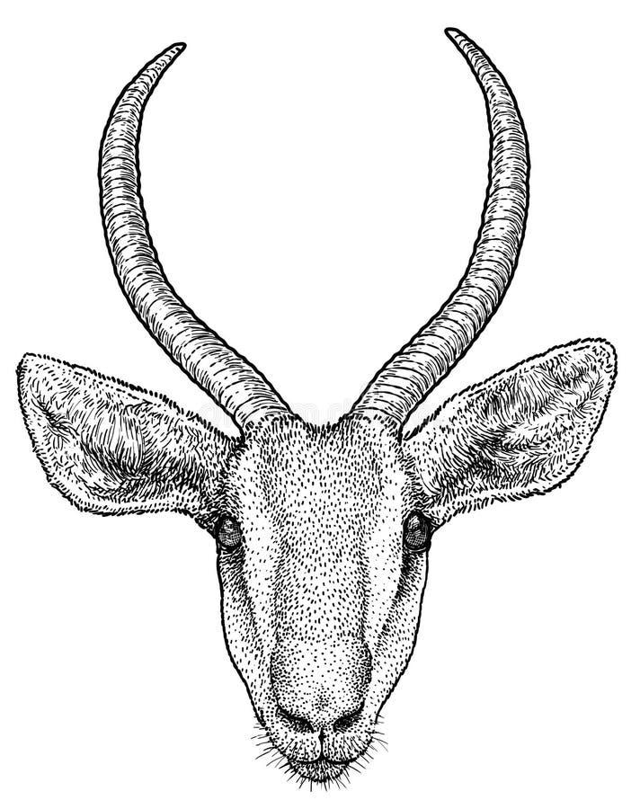 Gazelle portrait illustration, drawing, engraving, ink, line art, vector stock illustration