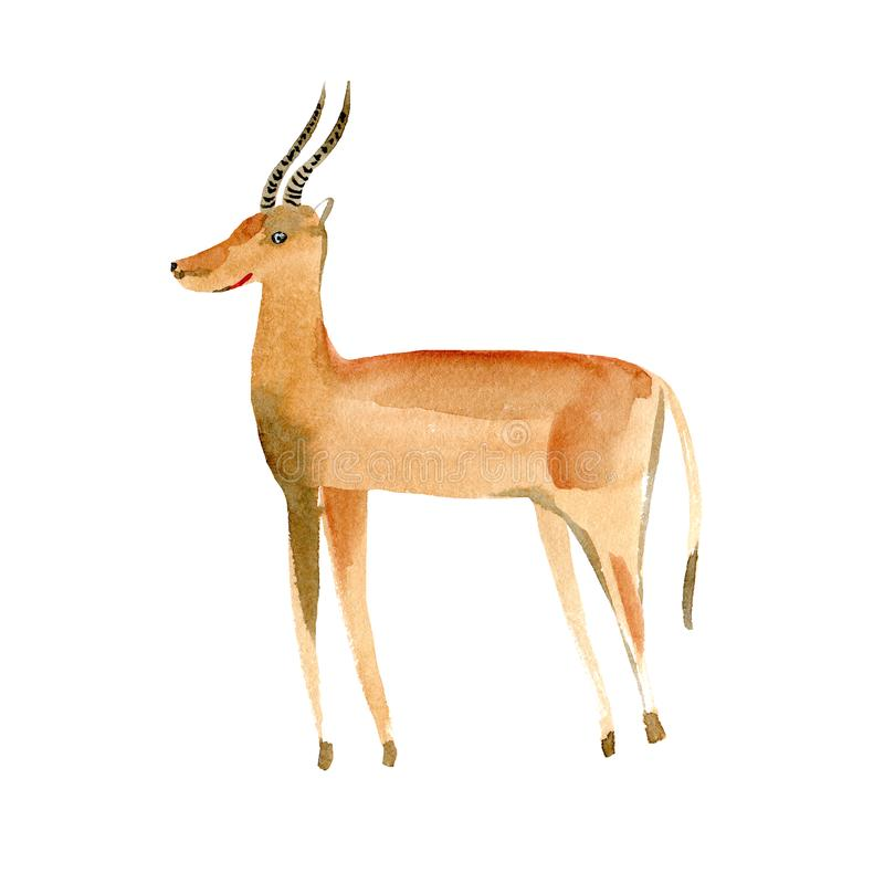 Gazelle.  Wild animal image. Watercolor hand drawn illustration. royalty free illustration