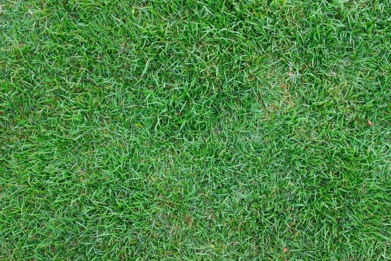 Download Gazon zdjęcie stock. Obraz złożonej z ogrodnictwo, naturalny - 57674048