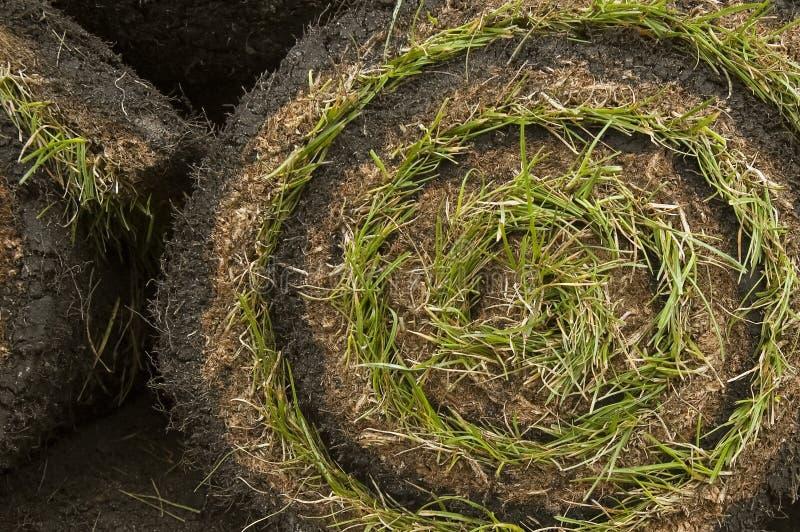Gazon d'herbe photo stock