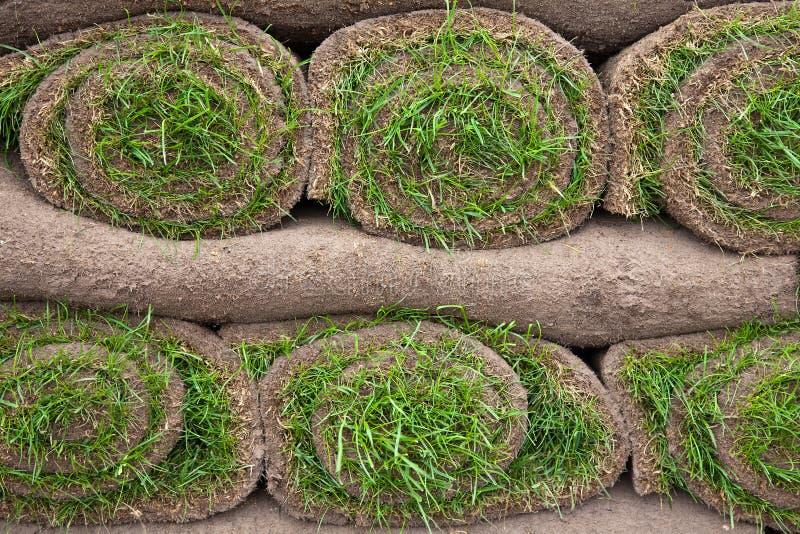Gazon de pelouse image stock