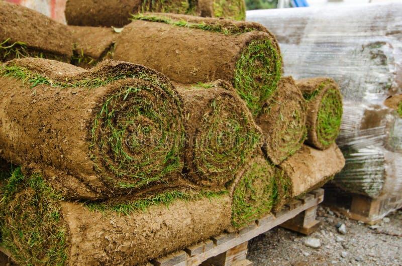 Gazon de pelouse photos stock