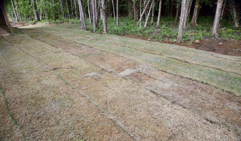 Gazon et saleté d'herbe de Bermudes qui a été fraîchement étendue photographie stock