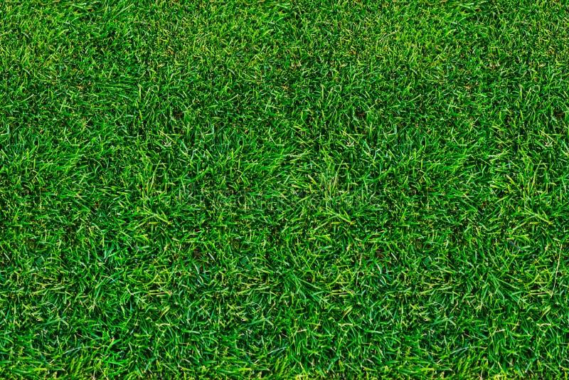 Gazon, groen gras in de zomer Mening van hierboven close-up, natuurlijke achtergrond stock foto