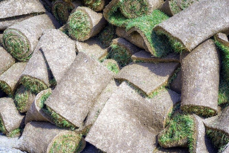 Gazon herbeux en petits pains photo stock