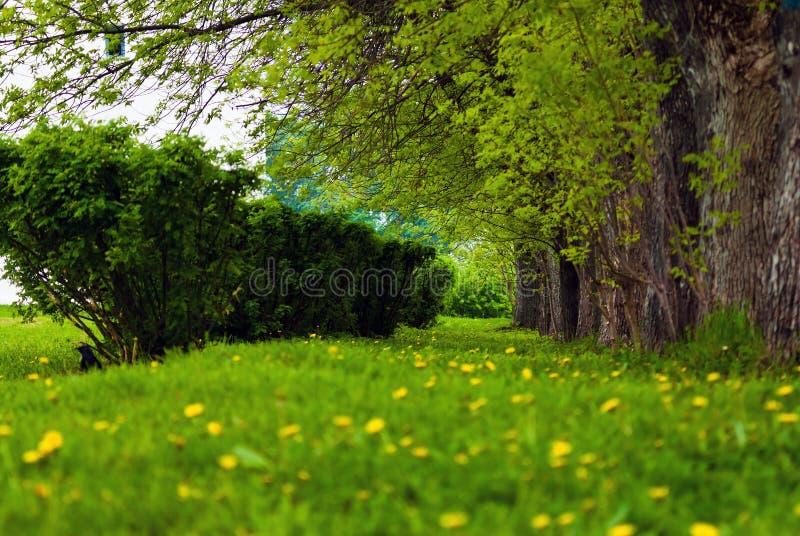 Gazon in het park waar de bomen en de struiken groeien Groene de lentefoto stock afbeelding
