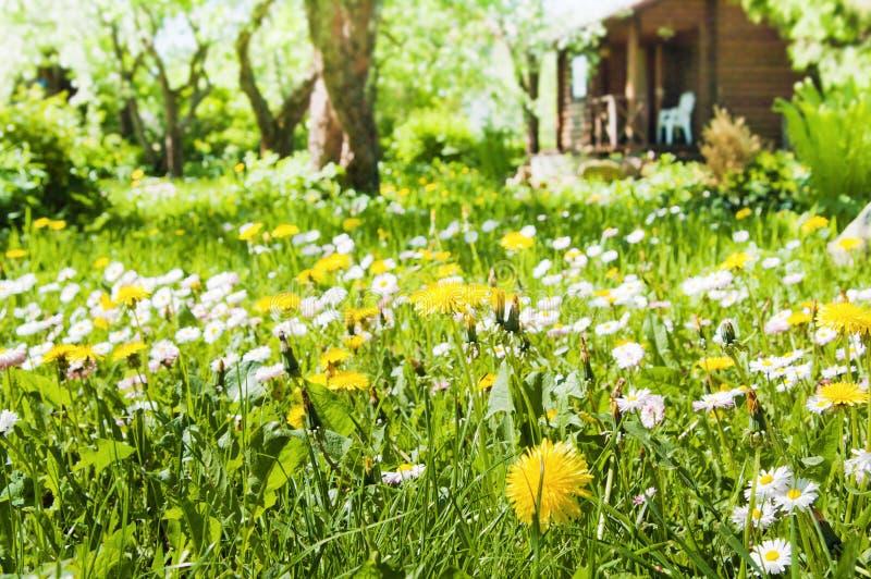 Gazon met bloemen stock afbeeldingen