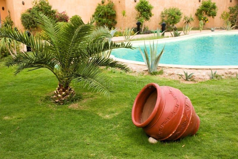 Gazon met palm en rode pot dichtbij pool royalty-vrije stock afbeelding