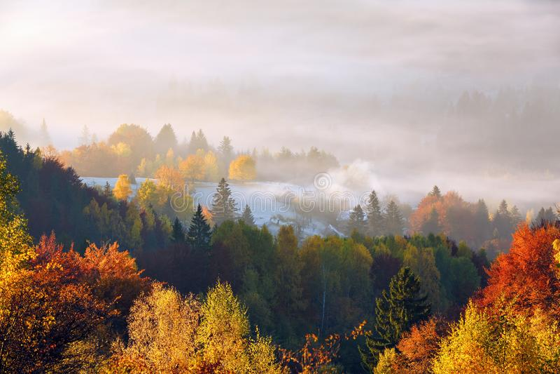 Gazon o?wieca s?o?ce promieniami Majestatycznej jesieni wiejski krajobraz Fantastyczna sceneria z ranek mgłą zielone ??ki zdjęcie royalty free