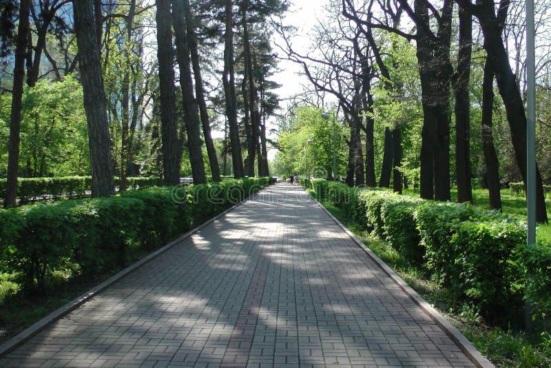 Gazon, park, bomen, stock afbeelding