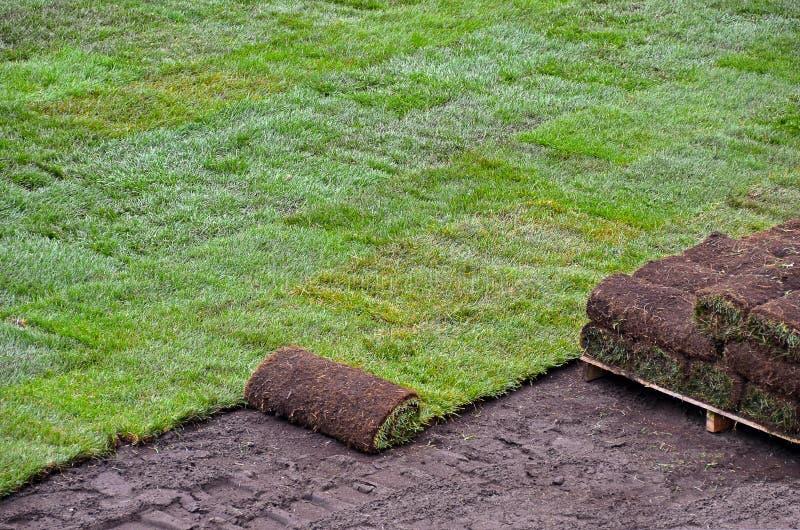 Gazon roulé pour la pelouse photo stock