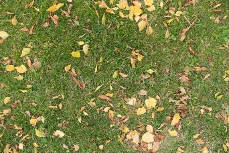 Gazon w jesieni zakrywającej z brzozą i kasztany spadać liśćmi obrazy stock