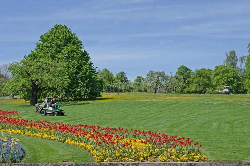 Gazon z kwiatami w centrum park zdjęcia stock