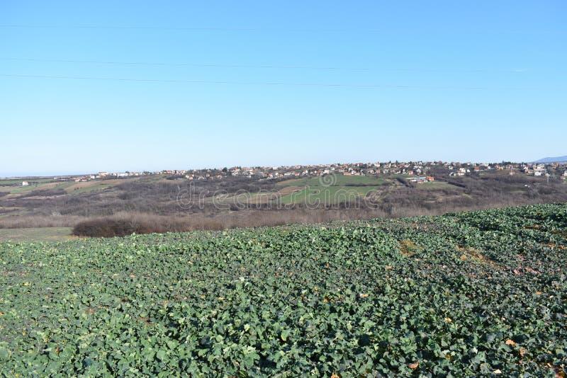 gazon z miasto widokiem obrazy royalty free