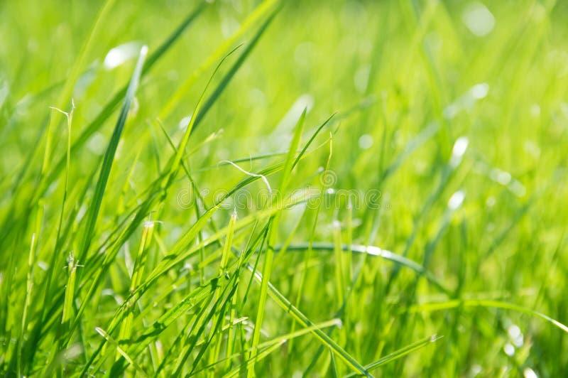 Gazonachtergrond Vers groen gras in tuin levendig heldergroen tapijt openlucht decoratieve installatie voor het modelleren, het s stock afbeeldingen