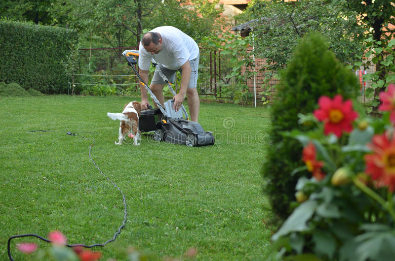 Gazonu pies i kosiarz obraz royalty free
