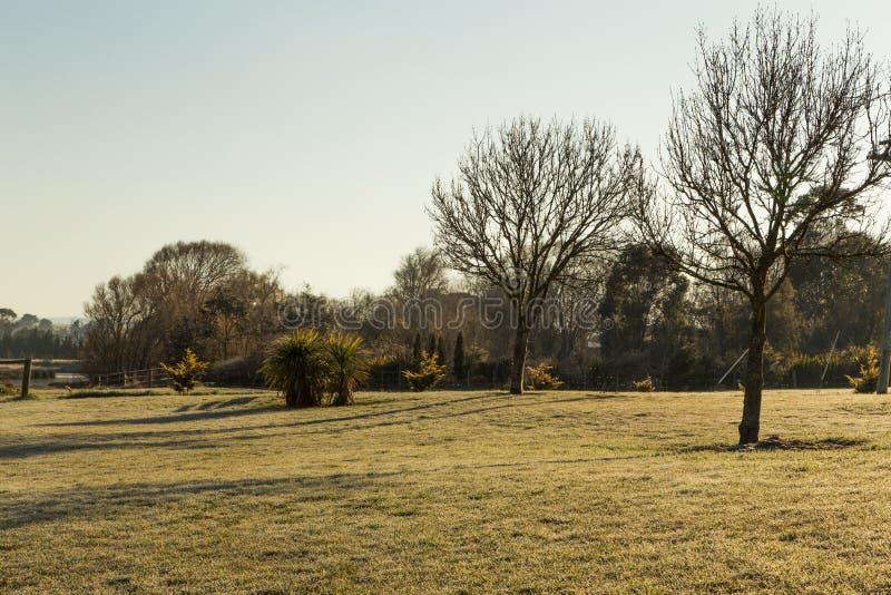 Gazonu pole z suchymi drzewami - zima Australia obrazy royalty free