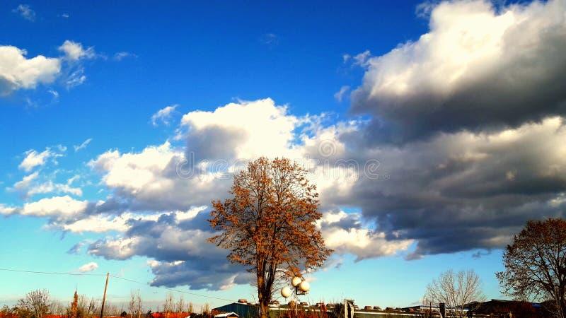 Gdy liście spadają zdjęcia stock