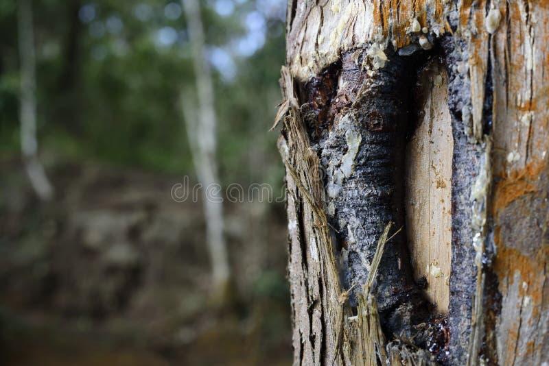 gdy tło barkentyna był może drzewo używać obrazy royalty free