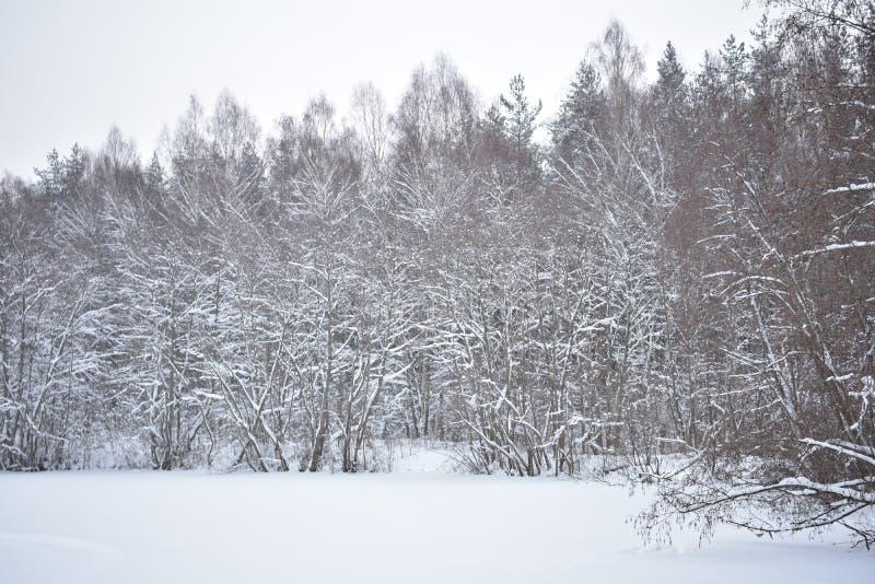 Gdy zima komesi, natura rozumieją że ja jest czasem relaksować zdjęcie stock