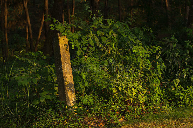 Gdzieś w Shi mężczyzna lasu parku zdjęcia stock