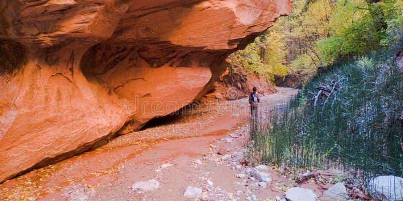 Geërodeerdem Rots in Nationaal Park Zion royalty-vrije stock foto's