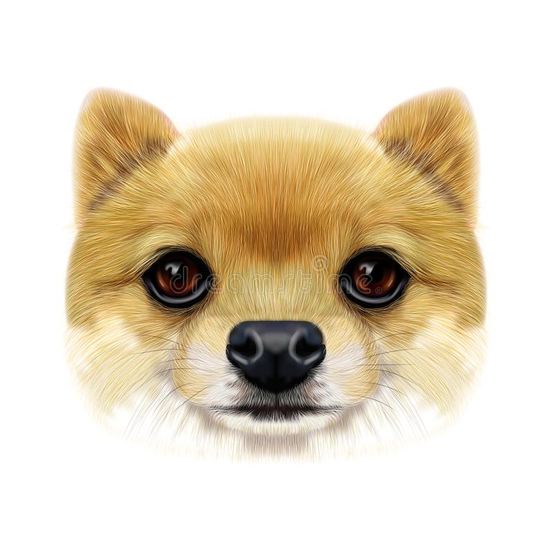 Geïllustreerd gezicht van Pomeranian-Spitz Hond royalty-vrije stock afbeeldingen