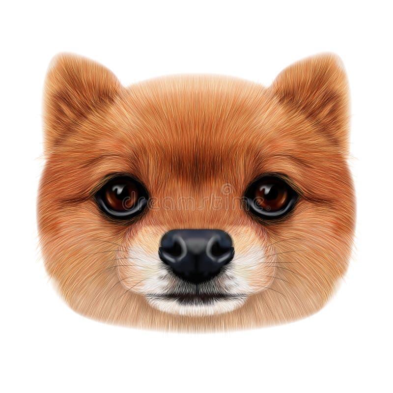 Geïllustreerd gezicht van Pomeranian-Spitz Hond stock foto's