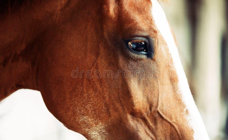Geïsoleerd beeld van mooi paard met hoofd royalty-vrije stock foto's