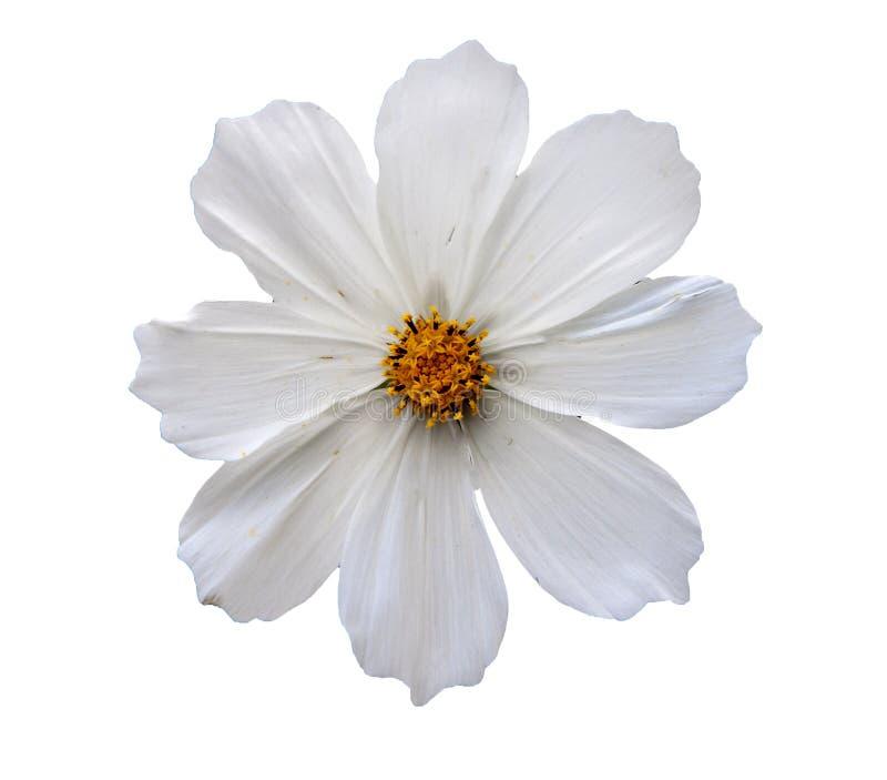 Geïsoleerd bloemhoofd stock foto's