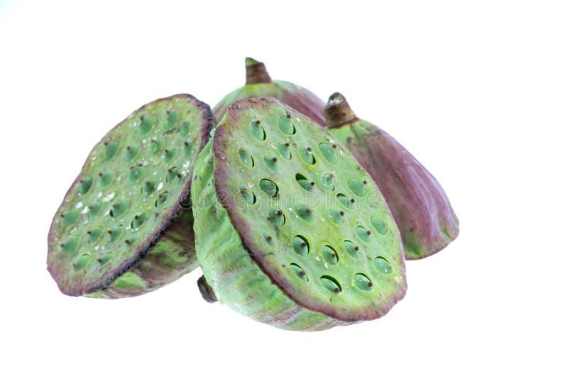 Geïsoleerd de zaden groen van Lotus royalty-vrije stock afbeelding