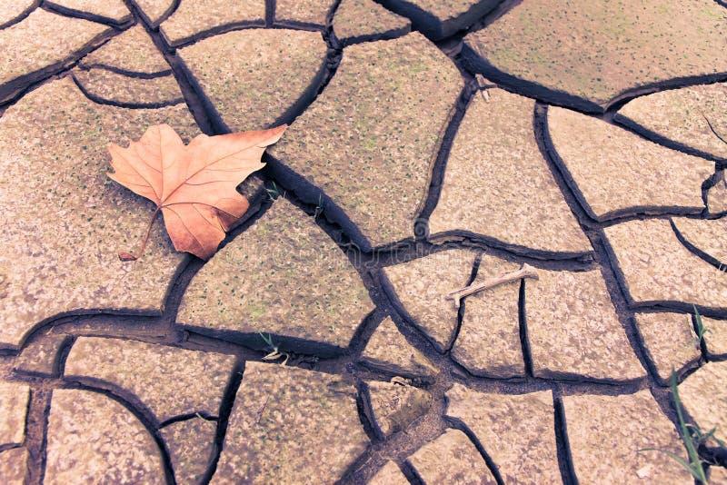 Geïsoleerd droog blad op droge grond royalty-vrije stock foto
