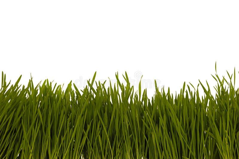 Geïsoleerd gras stock afbeeldingen
