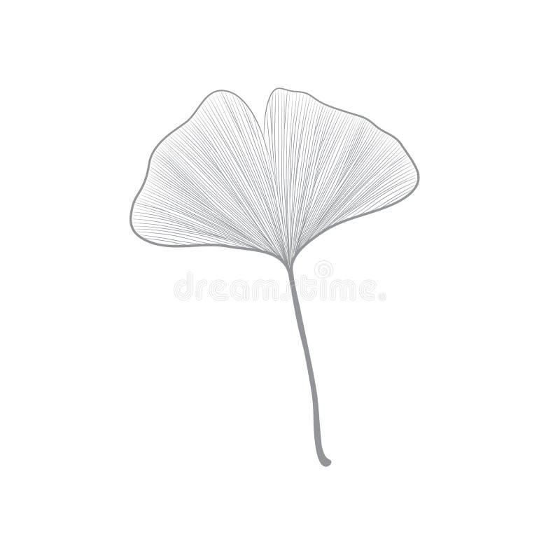 Geïsoleerd Grey Ginko Leaf Line Drawing op Witte Achtergrond stock illustratie